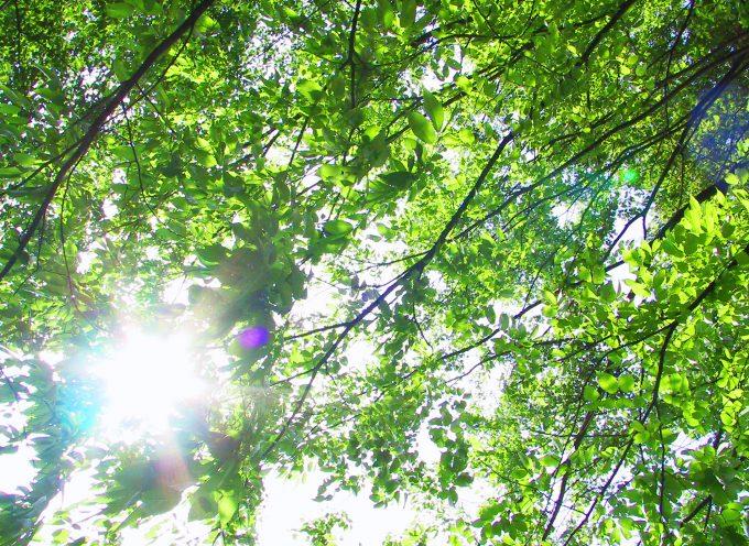 琵琶湖をママチャリで一周してみた! 距離は? 時間は? そもそも可能なのか?