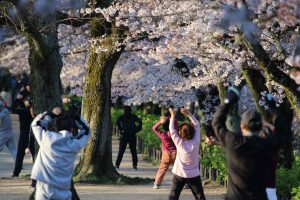 radio-gymnastic-exercises-under-the-cherry-blossoms