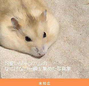 電子書籍『大好き! プディングジャンガリアン ハムスター写真集』を発売しました!